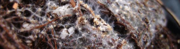 Wat zijn mycorrhiza?