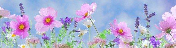 Planning en ontwerp van de tuin
