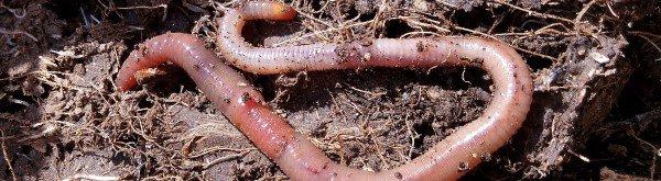 Wat is wormenmest?