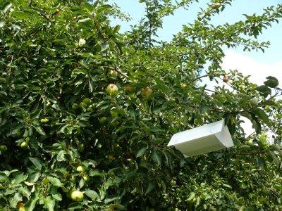 Deltaval tegen fruitmot in appelbomen