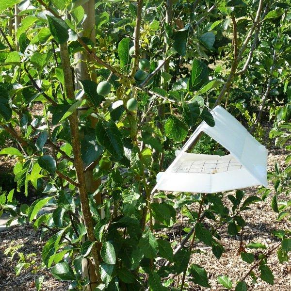 Deltaval voor bestrijding van pruimenmot