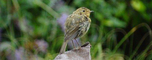 vogels aantrekken in je tuin